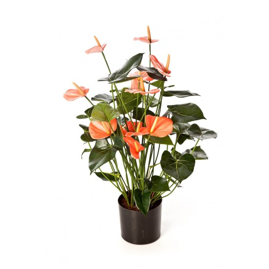 ANTHURIUM DELUXE ROSE AVEC POT